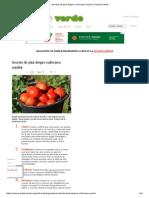Secrete de Știut Despre Cultivarea Roșiilor