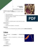 Enfermedades Causadas Por Bacterias Con Imagenes