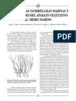 Origen de Las Fanerógamas Marinas y Adaptaciones Del Aparato Vegetativo Al Medio Marino