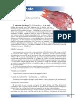 salmonete.pdf