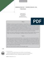 Dialnet-AspectosEmbriologicosYMorfologicosDelPancreas-4788209