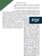 Replicación Del DNA. Guía 3