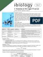 Rhizobium Root Nodules & Nitrogen Fixation