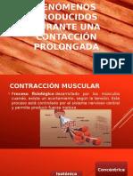 Contraccion muscular fisiologia