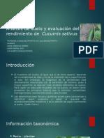 Análisis de Suelo y Rendimiento De Cucumis sativus