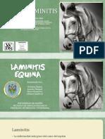 Laminitis equina