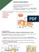 Membrana plasmática y centrosoma.pptx