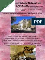 El Museo de Historia Natural, En Nueva