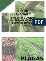 FREJOL PLAGAS Y ENFERMEDADES.pptx