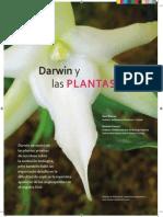Darwin Plant As