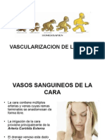 Vascularizacion de La Cara
