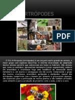 Artropodes Slide