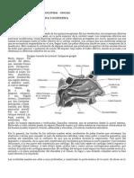 Material y Taller Sensopercepcion Olfativa y Gustativa