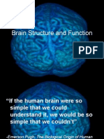 Lecture for Brain Structure