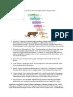Contoh Susunan Takson Dalam Klasifikasi Adalah Sebagai Berikut