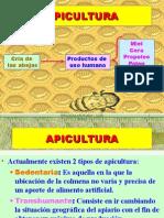 Apicultura Si Albinele Curs (7)