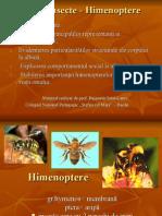 Apicultura Si Albinele Curs (10)
