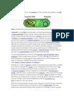 Plasmid Microbio