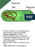 plasmidddd