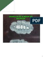 Gelatinizacion de almidones durante la Cocción Del Arroz