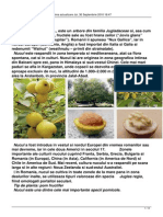 177195603-NUCUL.pdf