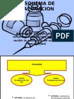 esquemadevacunacion-140304122319-phpapp02
