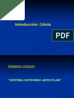 sistema-oseo-muscular1.ppt
