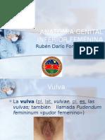 anatomiagenitalinferiorfemenina-120223152836-phpapp01