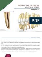Interactive 3 d Dental Anatomy
