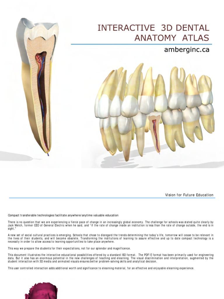 Interactive 3 D Dental Anatomy Educational Technology Tongue