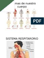 Sistemas respiratorio