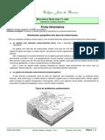FI- Paleoambientes Sedimentares(11ºano)