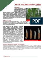El Boro (B) en La Nutricion de Los Cultivos