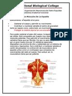 Tema Anatomia