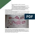 Proteínas - Biologia