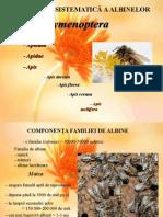 53061525-Generalitati-despre-albine.pps