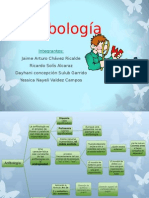 Anfibologas Final.ppt