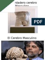 El verdadero cerebro Masculino.pptx