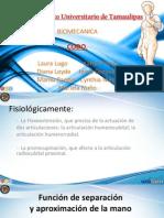 Codo - Biomecanica