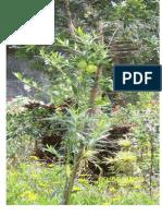 Botany 119- SP Paper