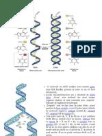 ADN si ARN