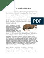 Evolución de los hominidos desde sus antecesores hasta el homo sapiens actual