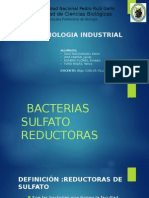BACTERIAS SULFATOREDUCTORAS