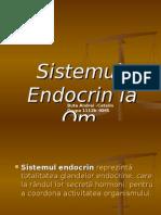 Bute Andrei -Sistemul Endocrin (Bun)