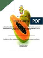Diploma Papaya