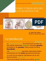 Anatomia y Fisiologia R1