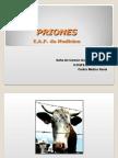 26.2.Priones