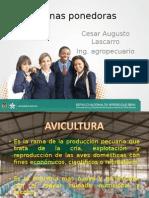 gallinasponedorasaviculturasena-140216220939-phpapp02