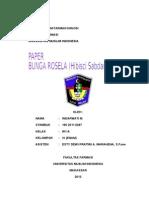 Paper Bunga Rosella