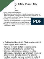 Fisiologi Umn Dan Lmn Sindy